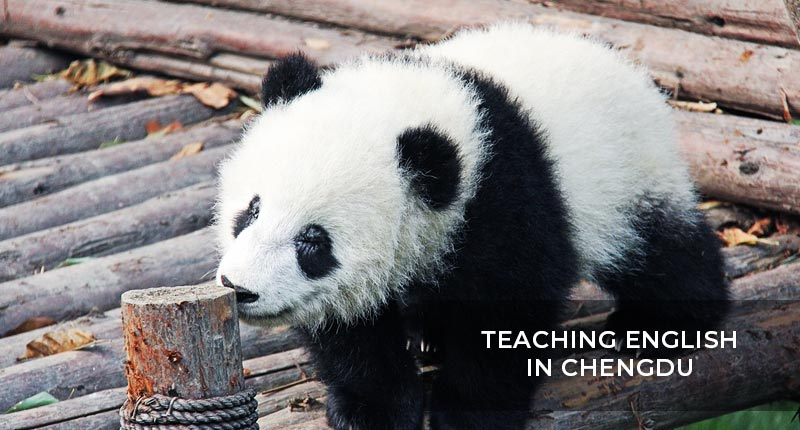 Teaching English in Chengdu